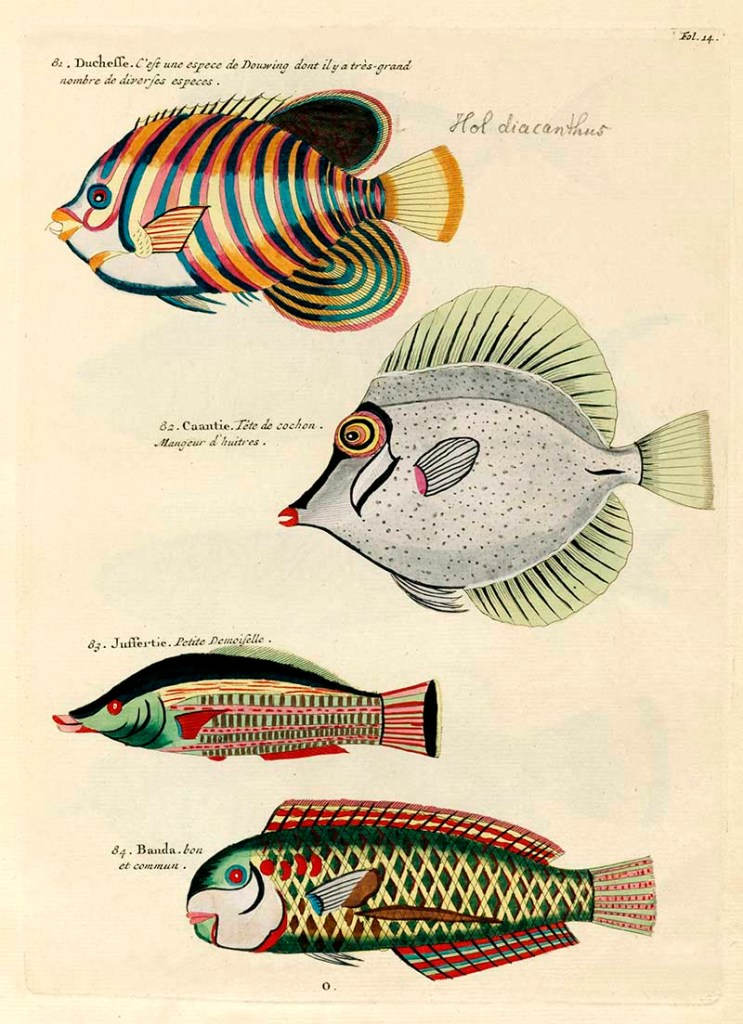 Antique fish prints 81-84