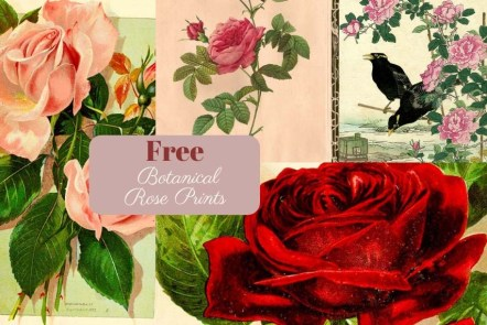 Free botanical rose prints to download