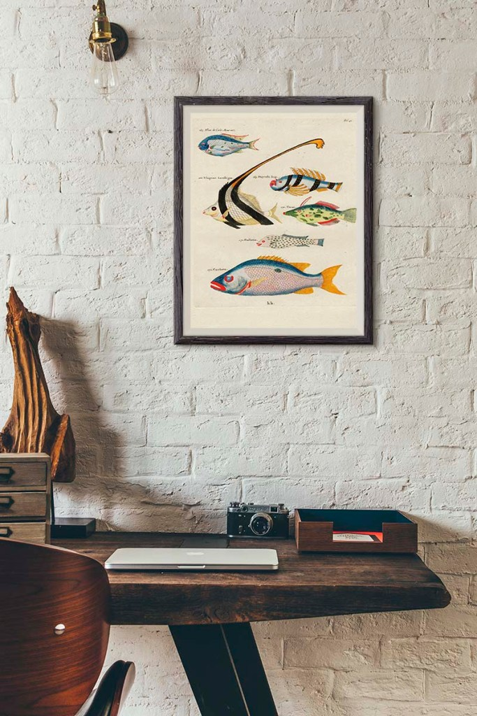 Fish paintings of Louis Renard