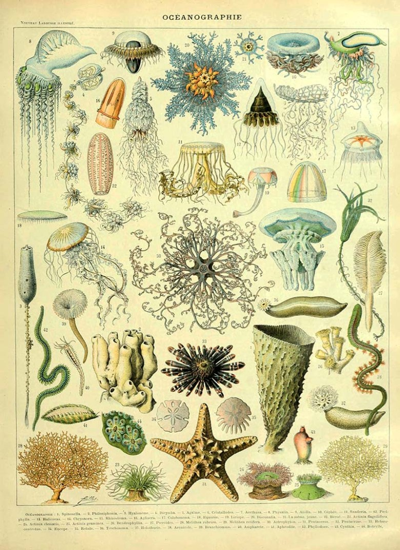 Oceanographie poster Adolphe Millot
