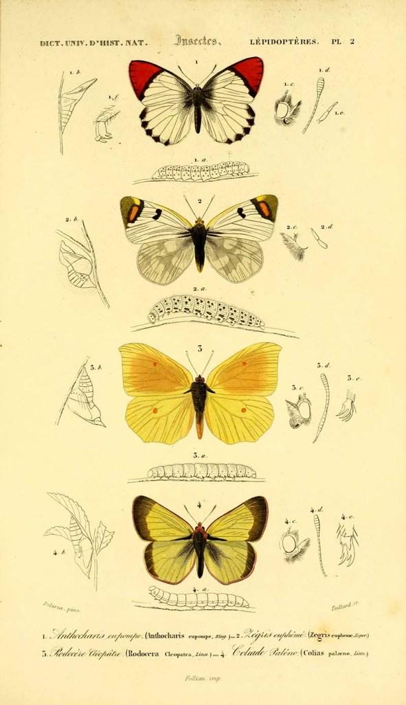 butterfly plate 2