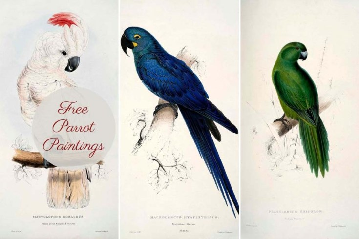 The Amazing Parrot Paintings Of Edward Lear To Print