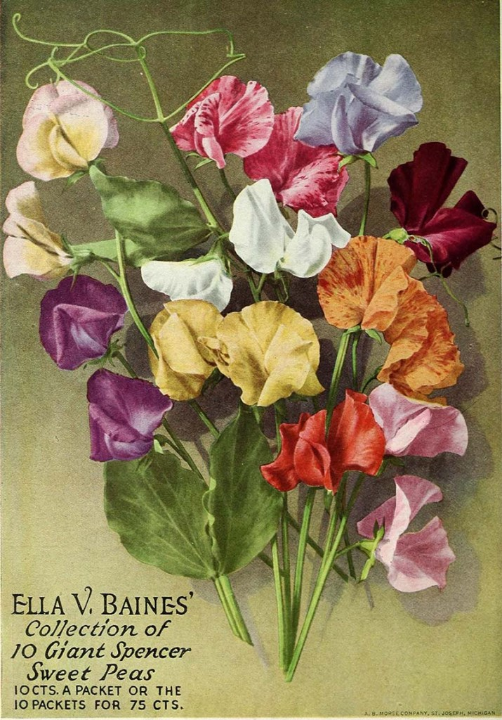 Sweet peas vintage seed packets