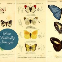 Beautiful Vintage Butterfly Images Free To Print