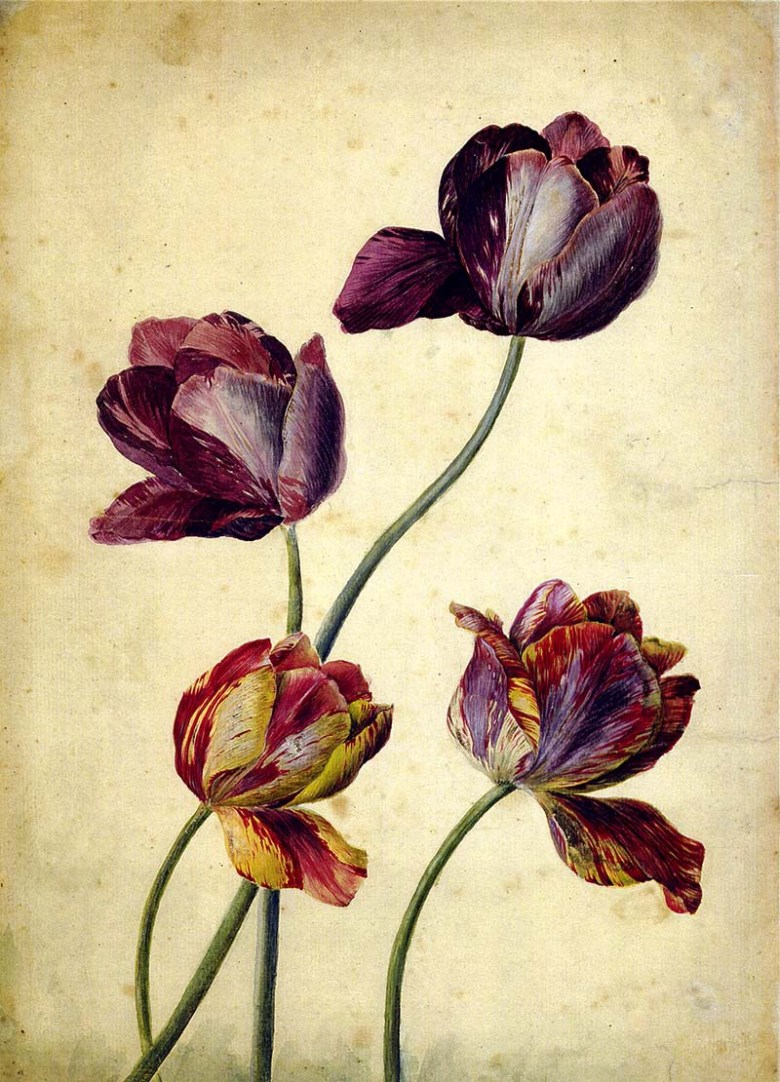 4 purple tulips