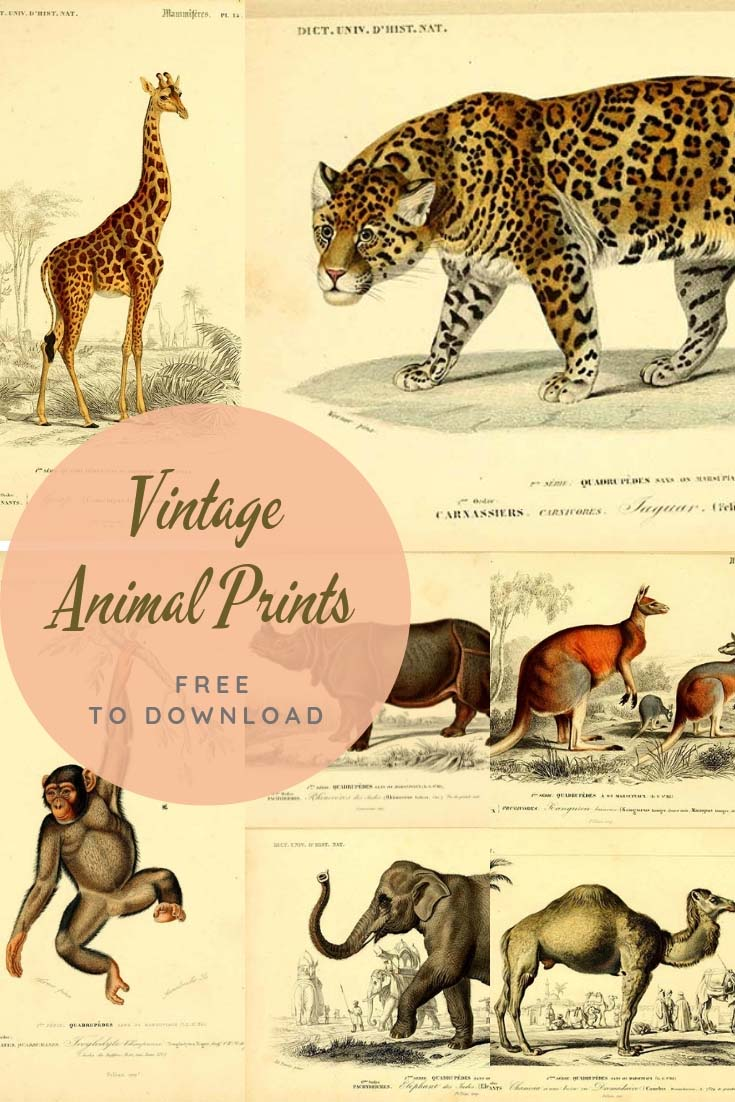 Vintage animal prints to download
