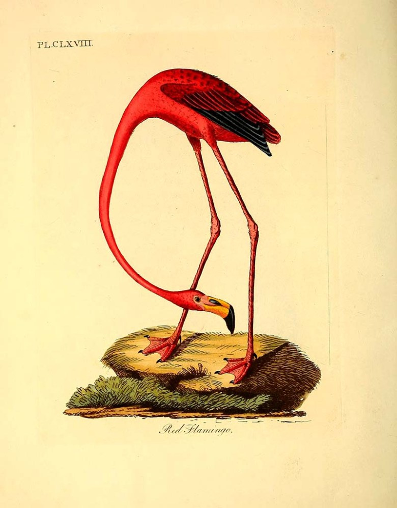 American Flamingo Painting