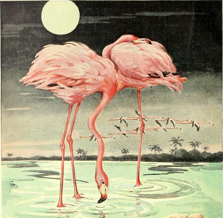 Pair of American Flamingos Painting