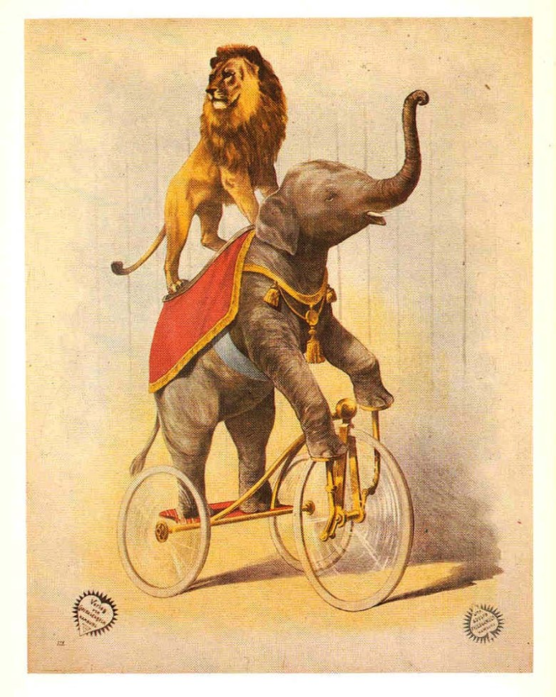 Elephant riding a bike
