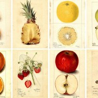 Beautiful Free Antique Watercolor Fruit Images To Download