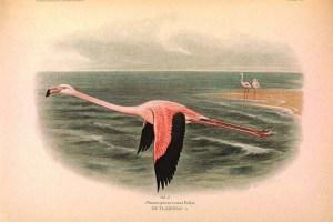 copyright free flamingo art prints