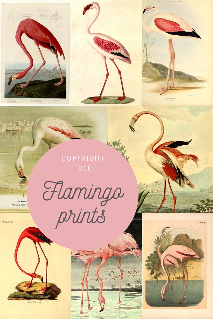 Flamingo art prints