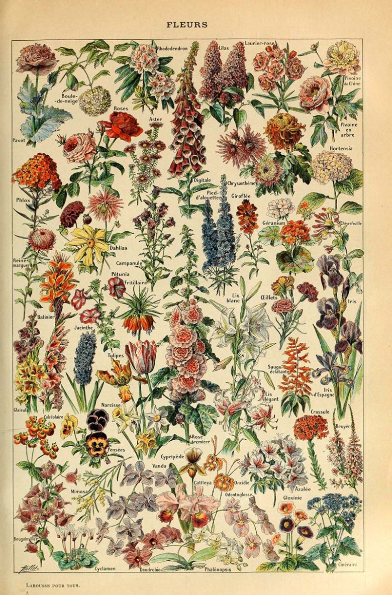 Fleurs Adolphe Millot