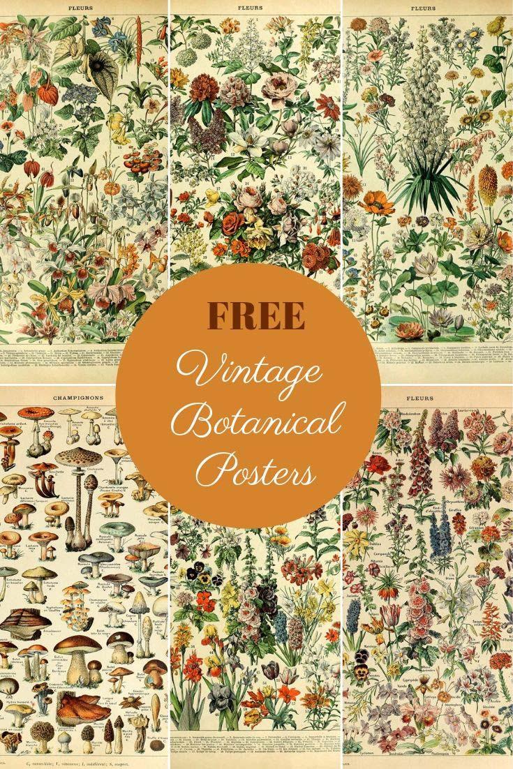 Free botanical posters