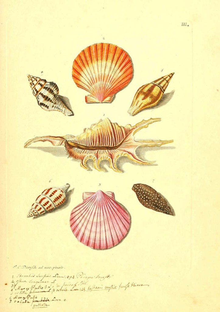 scallops and other shells