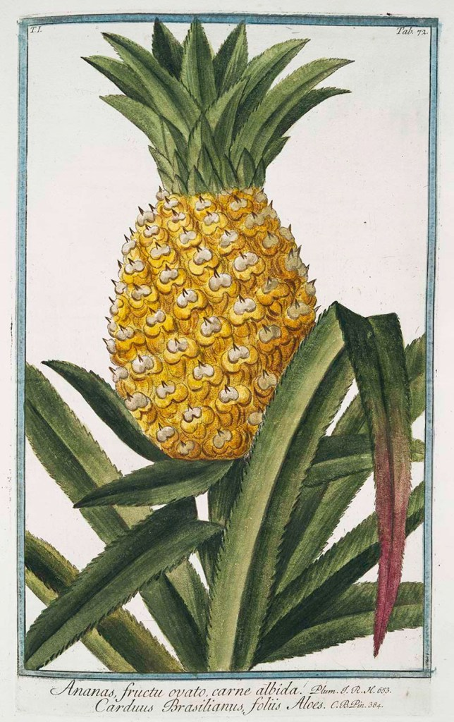 Vintage pineapple drawings and pineapple wall art prints free to download.