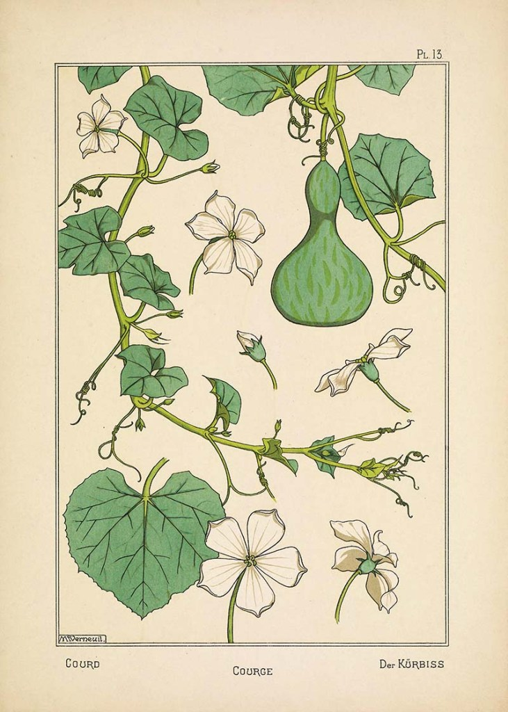 Courge (Squash) Botanical prints