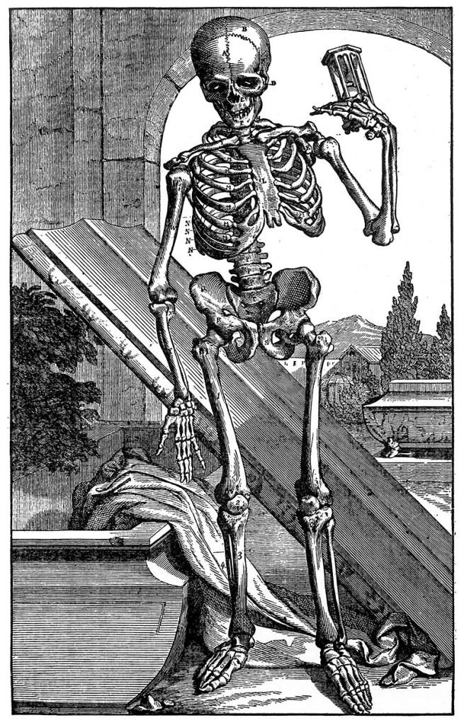 17th century skeleton art