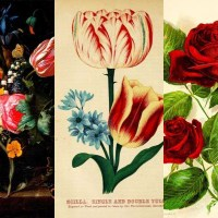 An Amazing Collection Of Free Vintage Flower Illustrations