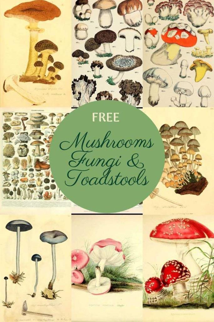 mushroom charts