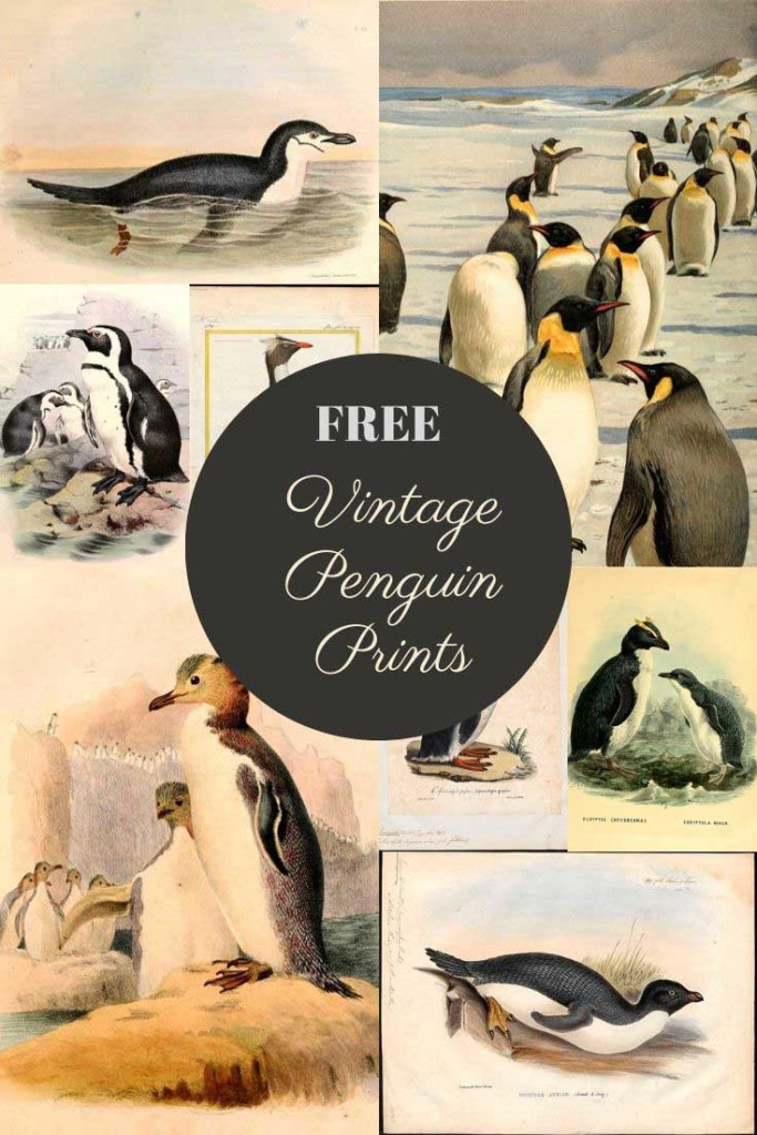 vintage penguin illustrations