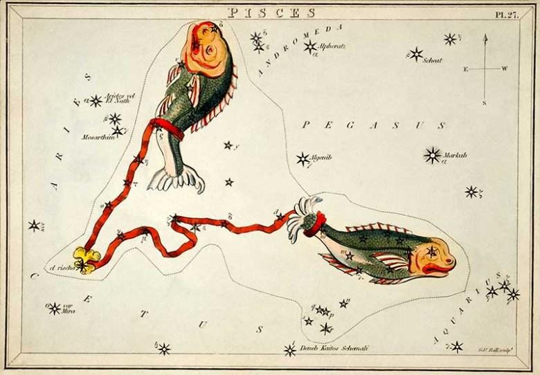 Pisces Zodiac illustriation