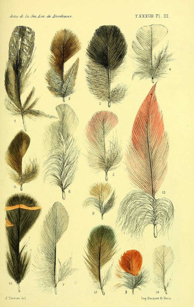 African Feather illustrations