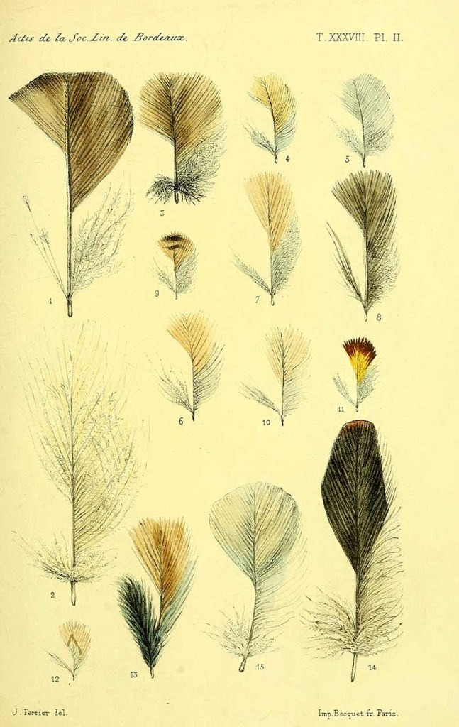 African bird feathers
