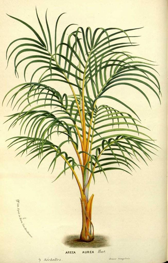 Tropical Princess palm prints