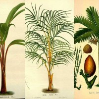 Cool Botanical Palm Tree Illustrations To Print