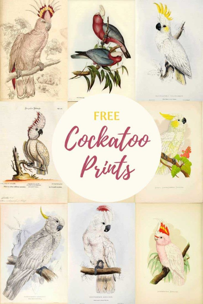 18 cockatoo prints to download