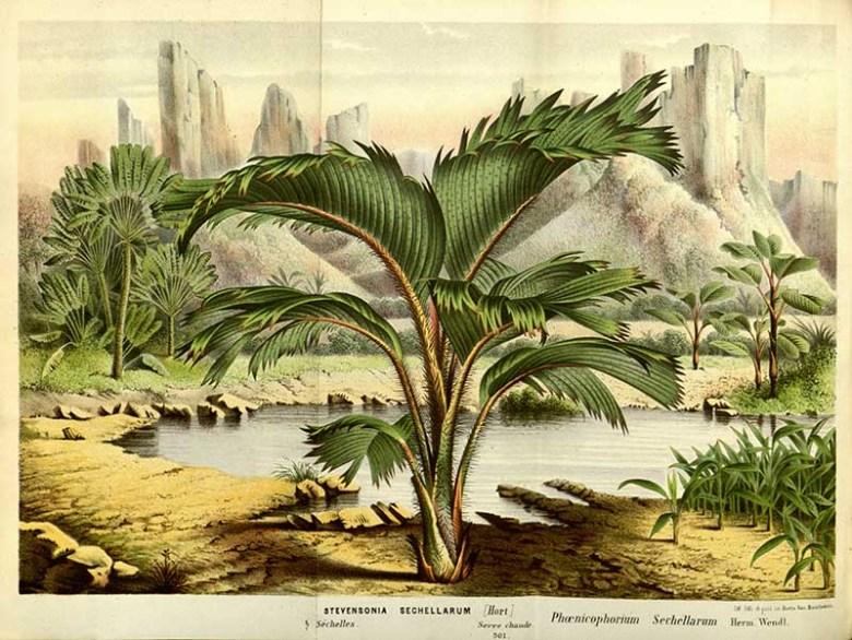 Thief palm