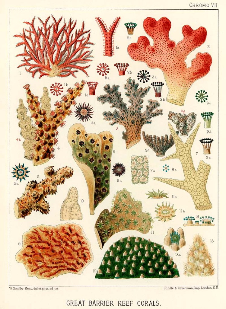 Great Barrier Reef Corals from The Great Barrier Reef of Austral