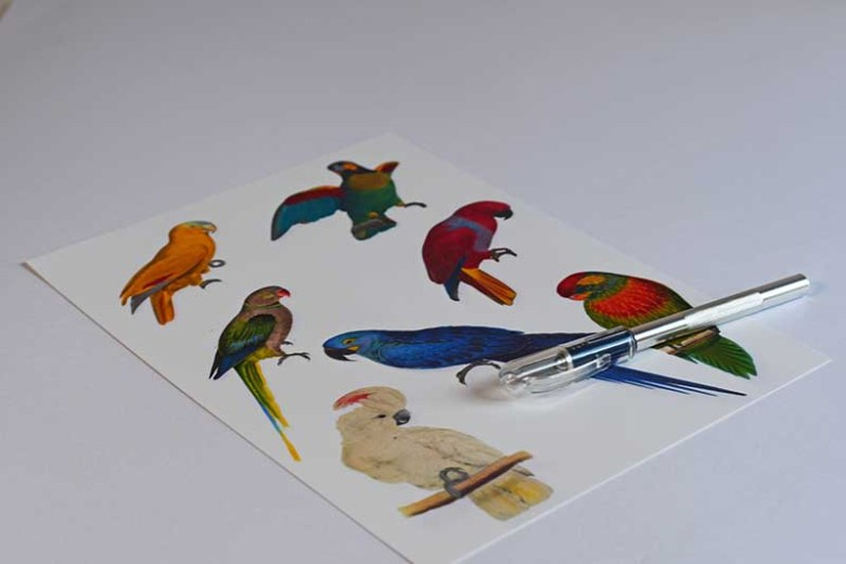 Parrot clip art for parrot decor