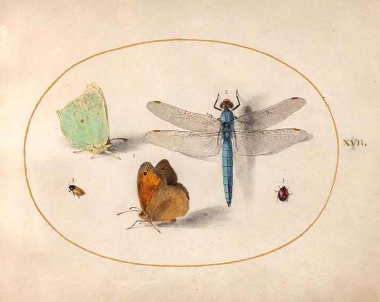 """plate 17 """"Joris Hoefnagel, Animalia Rationalia et Insecta (Ignis):"""