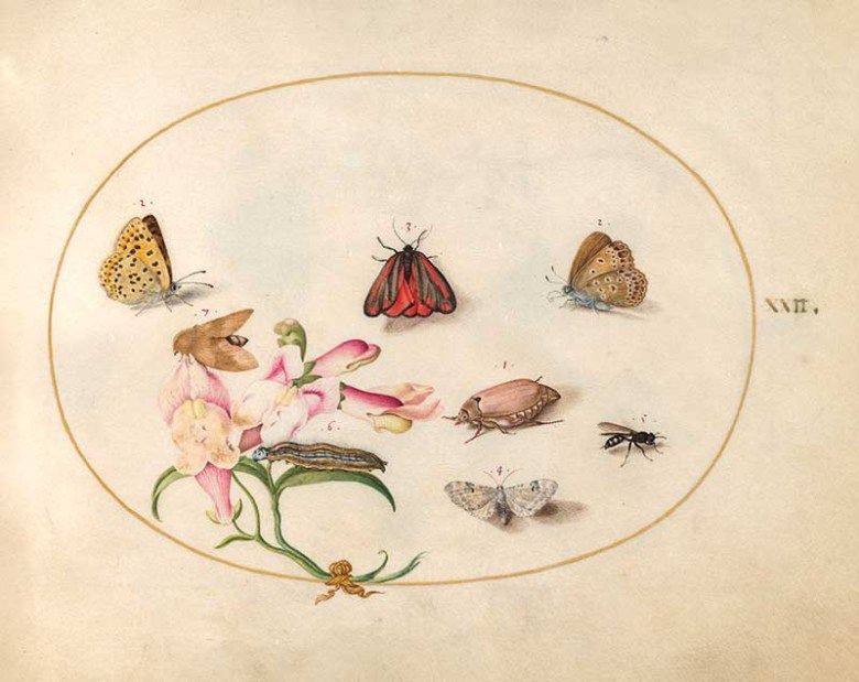 plate 22 Including Pink Flower and moths