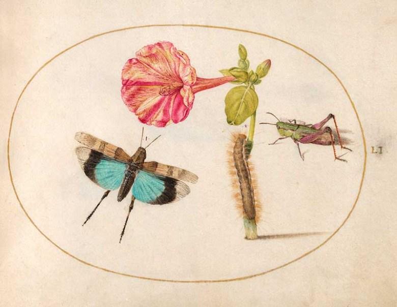 insect art by Joris Hoefnagel butterfly and flower