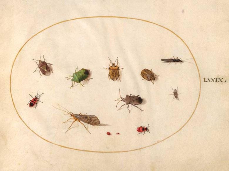 """Joris Hoefnagel small insect illustrations"