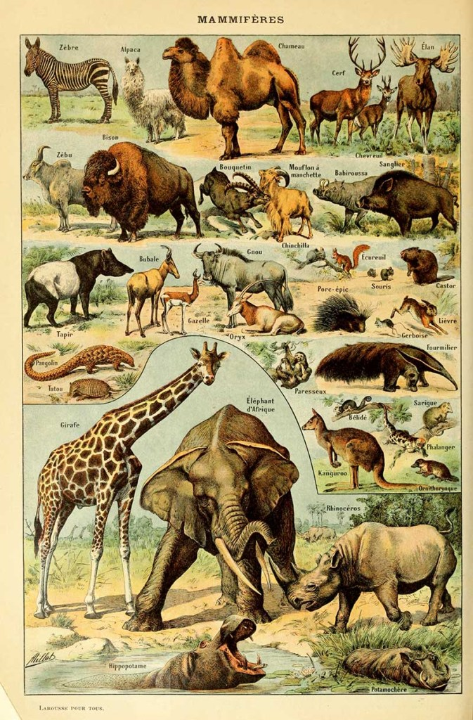 Animal Poster by Adolphe Millot