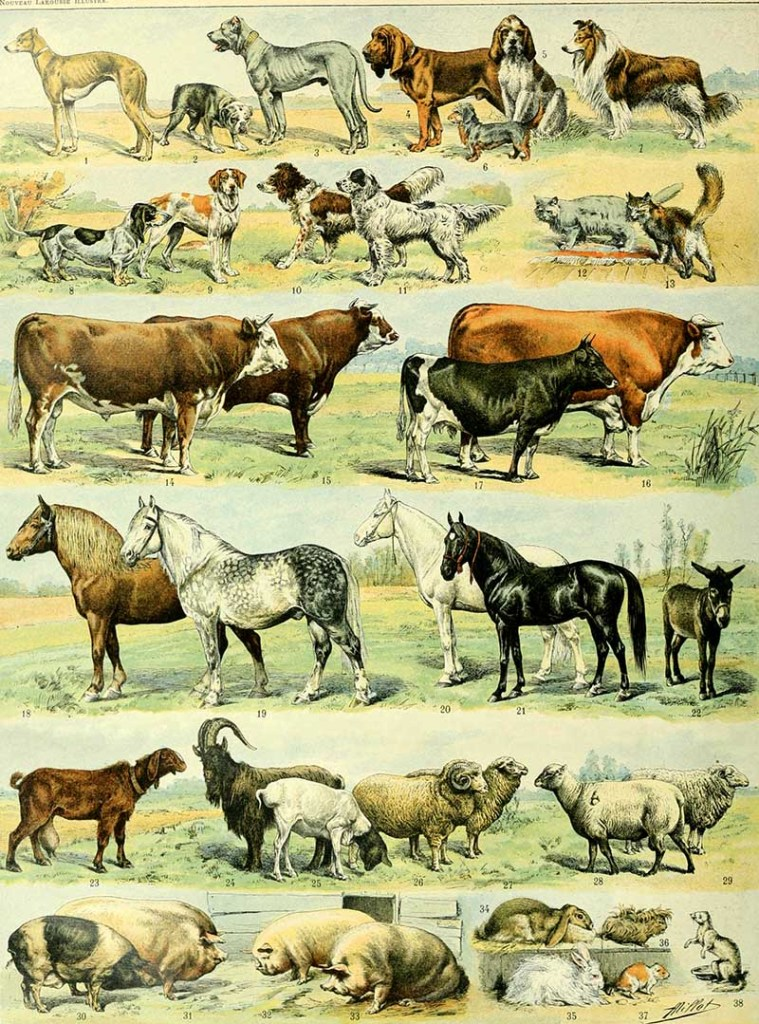 poster of domestic animals