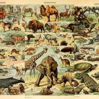Free Animal Posters From Illustrated Larousse Dictionaries