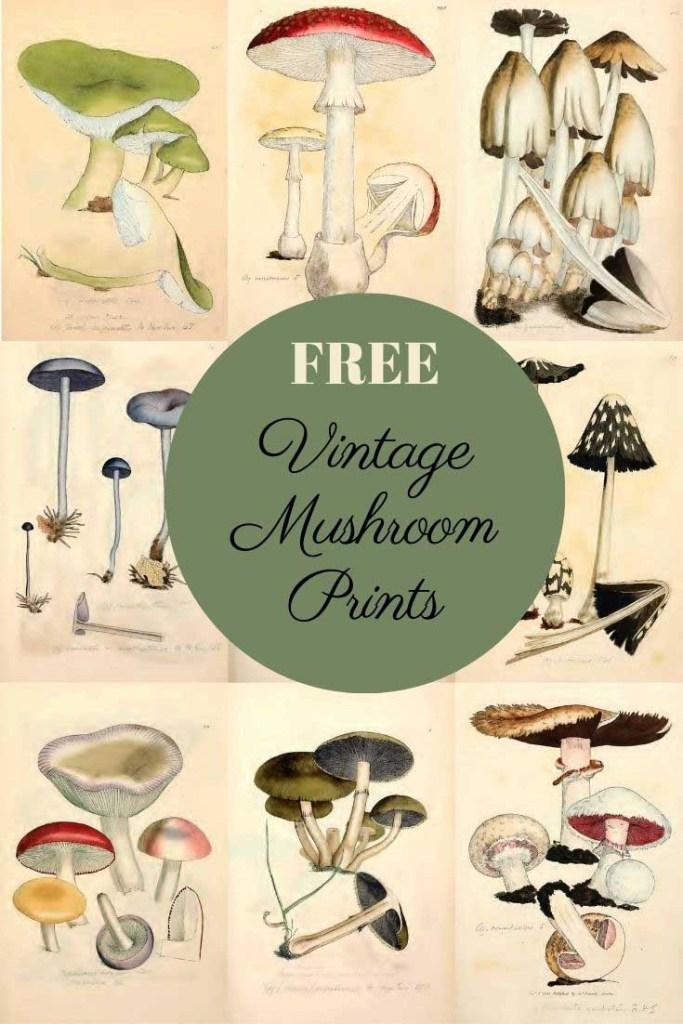 mushroom illustrations and drawings