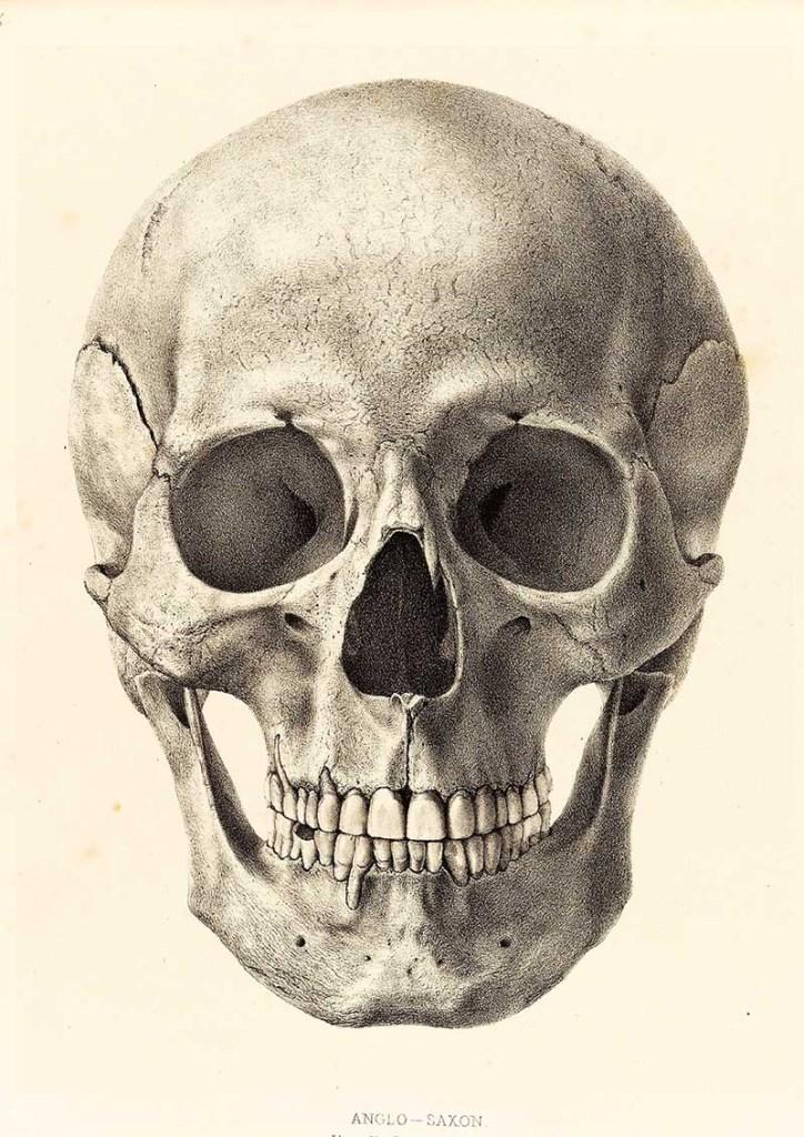skull head used for Halloween DIY skull decor