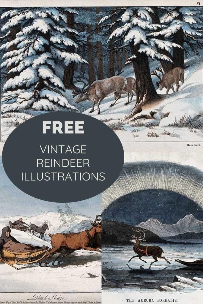 Free vintage reindeer illustrations and drawings