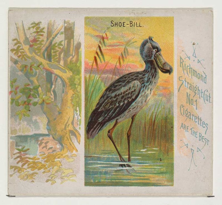 Shoe Bill bird illustration cigarette card