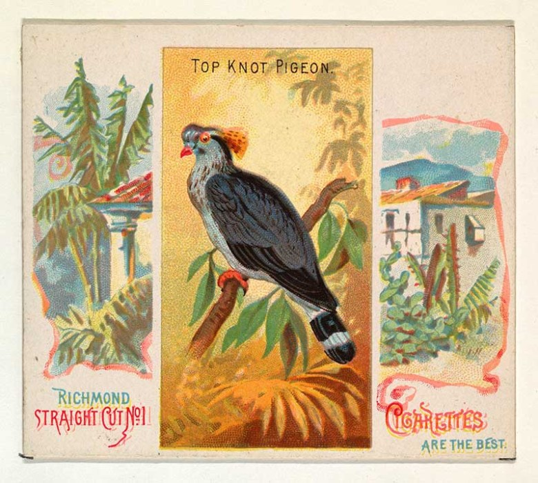 Top Knot Pigeon, from Birds of the Tropics series (N38) for Allen & Ginter Cigarettes