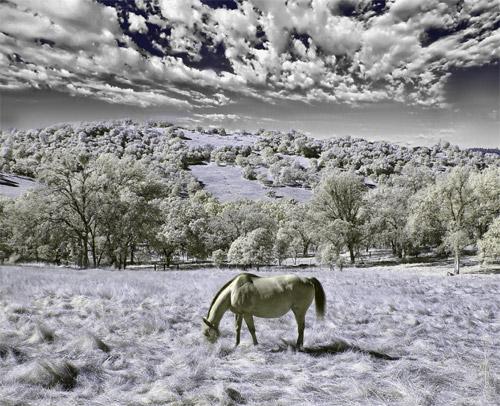 infrared photo tutorial