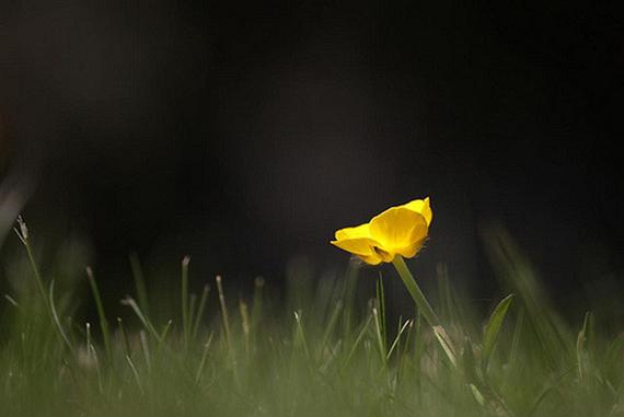 flower on dark background