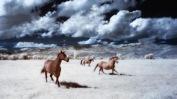 infrared horses
