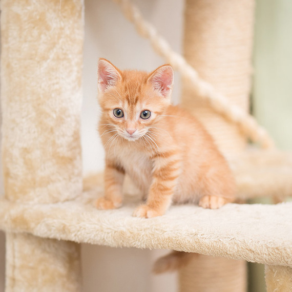 how to photograph a kitten